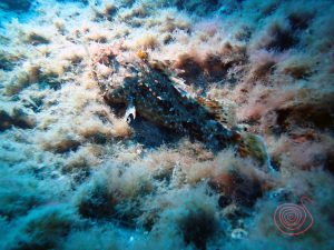 divingsantorini_scorpionfish